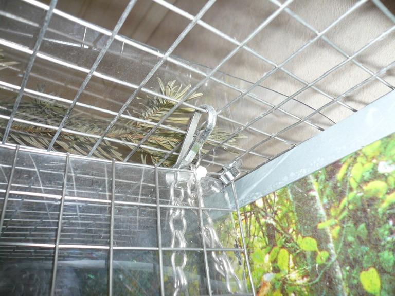 Gitterfläche an der Volierendecke befestigt