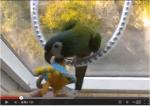 Papagei oder Sittich beisst | Papageientraining und Aggressionsspiele helfen