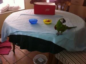 ikea f r papageien irma fleece decke sch tzt m bel und fu b den die vogelschule f r. Black Bedroom Furniture Sets. Home Design Ideas