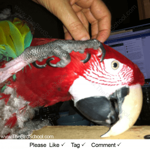Der Papagei und sein Sklave | Die Vogelschule für Papageien & Sittiche Grafik