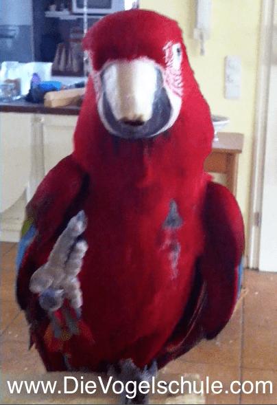 Papageien & Sittiche: Die Vogelschule tanzt & singt