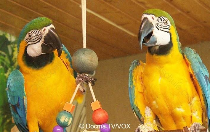 Beißende Aras | 3 Engel für Tiere | Liebe Papageien