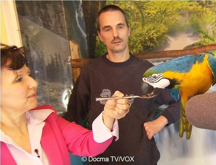 Beißende Aras | 3 Engel für Tiere | Papageientraining: Belohnung