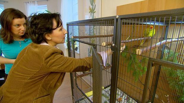 Ziegensittiche zähmen - drei Engel für Tiere - Ann Castro