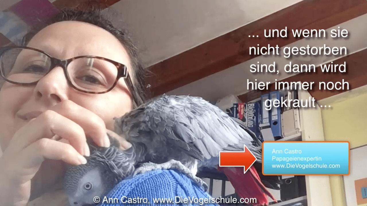 Papageientraining | Ara apportiert Wäsche