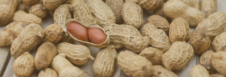Erdnüsse tragen Aspergillose bei Papageien & Sittichen WP