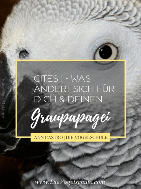 Graupapagei CItes ... was ändert sich für Halter?