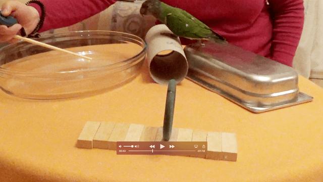 MODUL 10: ANGST</br>Du lernst, deinen Vögeln die Angst vor gruseligen Objekten zu nehmen