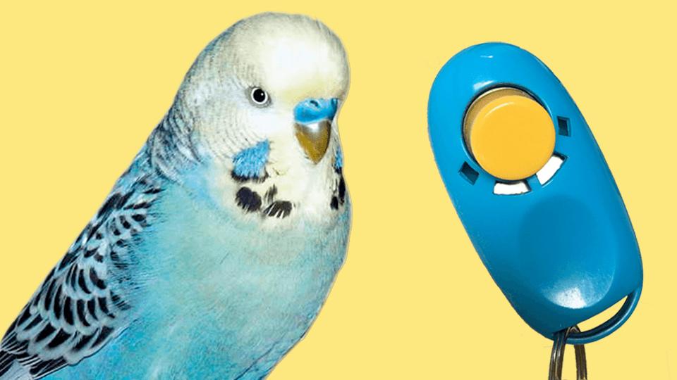 Clicker- & Beziehungstraining für Papageien & Sittiche  <u>... mehr</u>