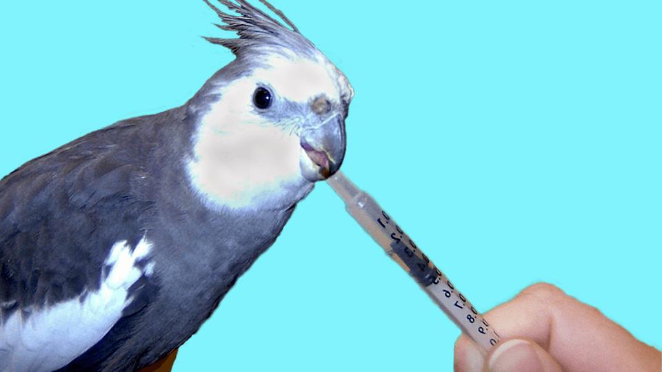 Medical Training & mehr für Papageien & Sittiche  <u>... mehr</u>