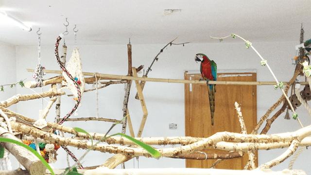 PROJEKTBEISPIEL<br>Vogelzimmer planen & einrichten