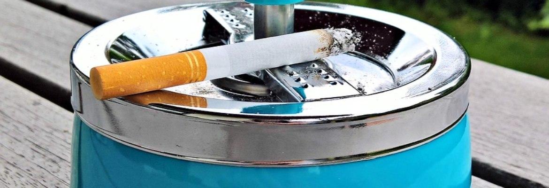 Rauchen Papagei & Sittich WP