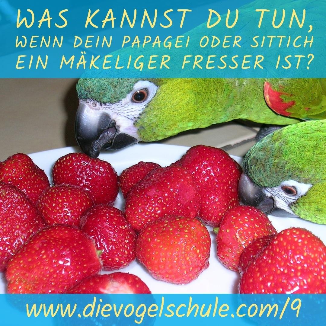 Futter für Papageien