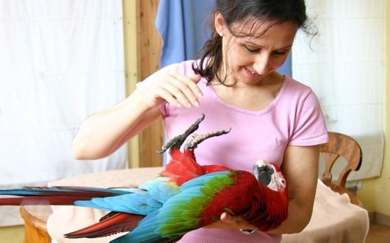 Papageienexpertin Ann Castro mit Ara