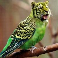 Beissen Wellensittich Tiger