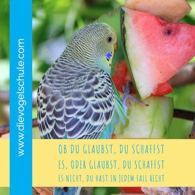 Papageienkurse, Gedanken-Gremlins und wie wir uns im Weg stehen - Wellensittich mit Wassermelone - Bild 2