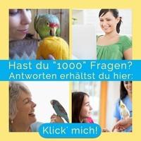 Fragen über Papageien & Sittiche - Divis