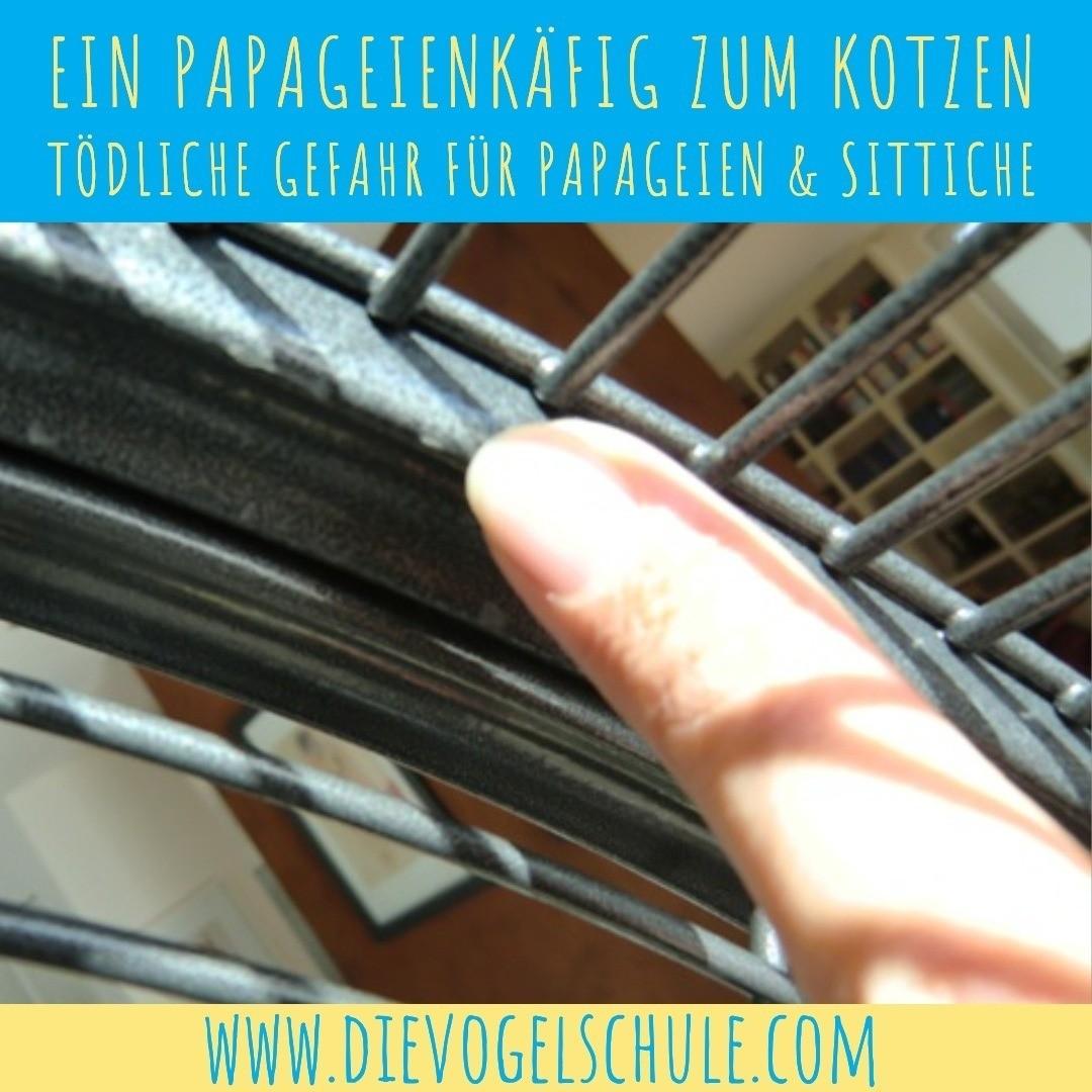 Papageienkaefig Moenchsittich IMG-3