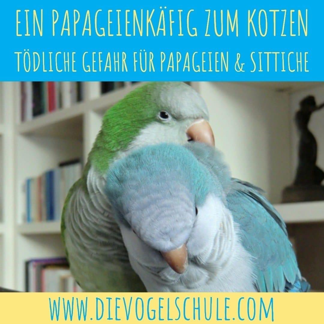 Papageienkaefig Moenchsittich IMG-4