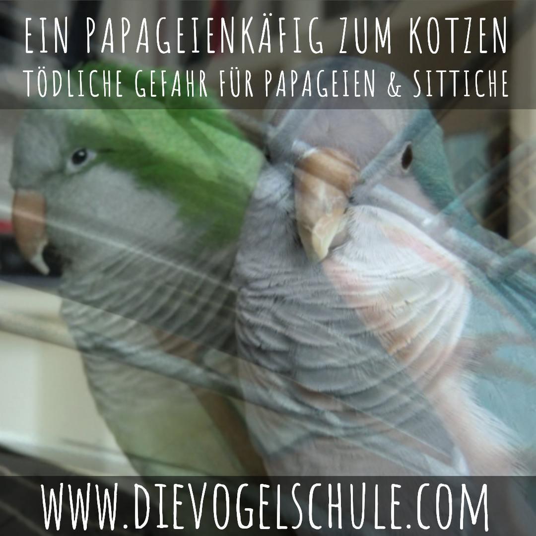 Papageienkaefig Moenchsittich