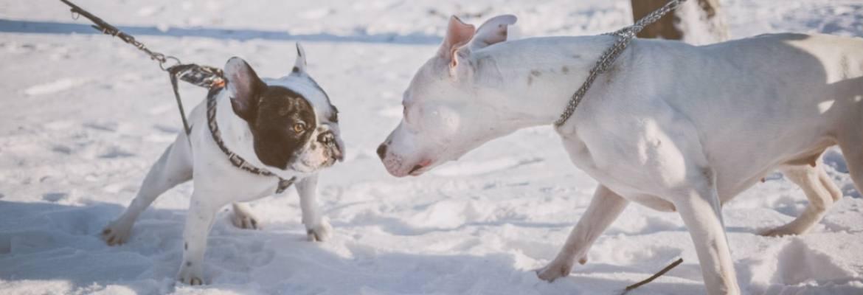 Hunde im Schnee - Papageientraining vs. Hundetraining