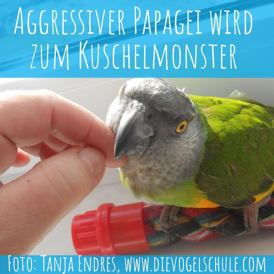 Aggressiver Papagei wird zum Kuschelmonster - Titelbild mit Coco dem Mohrenkopf