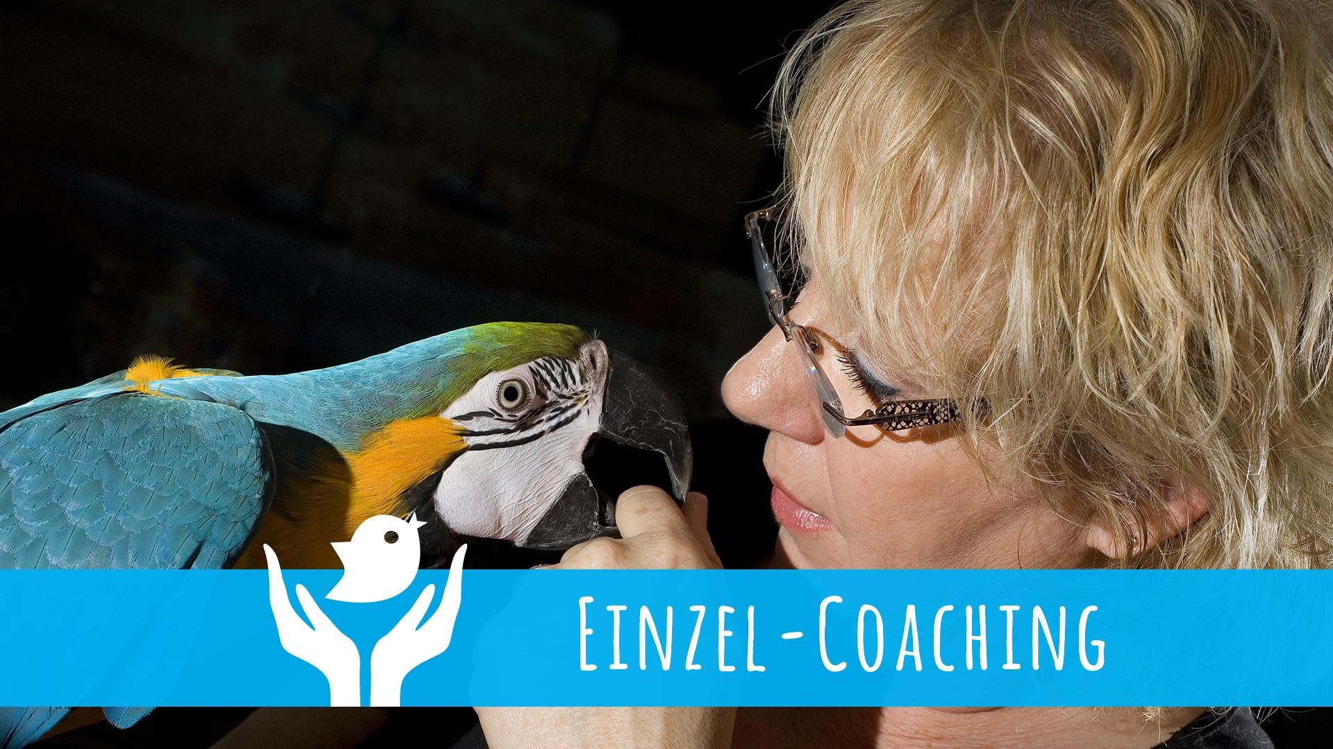 Einzel-Coaching für Papageien