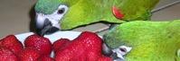 Futter für Papageien WP