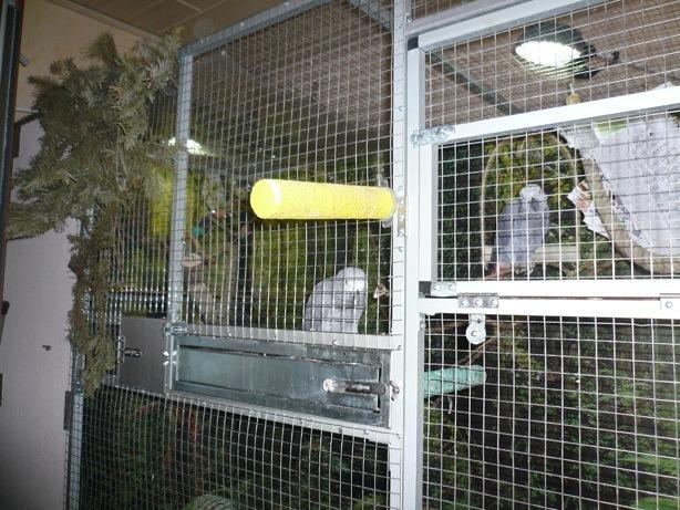 Inhalierkäfig für Papageien Bild 1