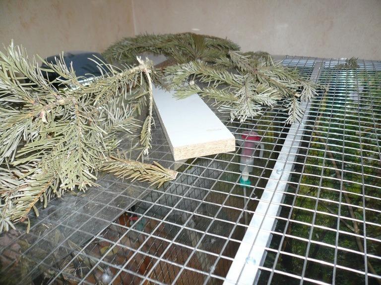 Inhalierkäfig für Papageien Bild 10