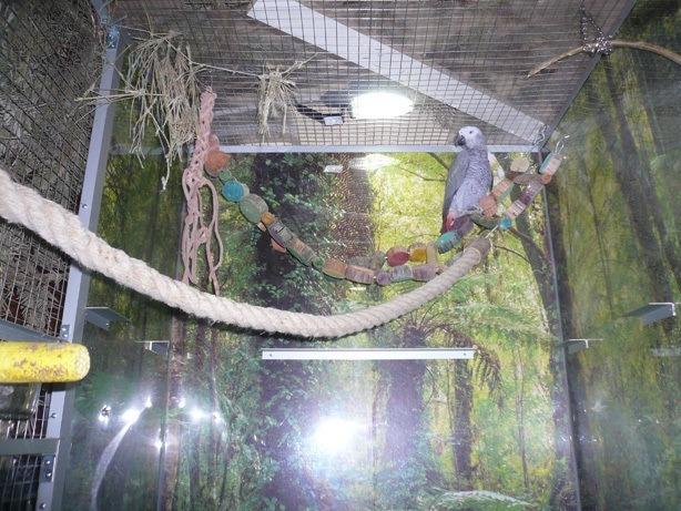 Inhalierkäfig für Papageien Bild 8