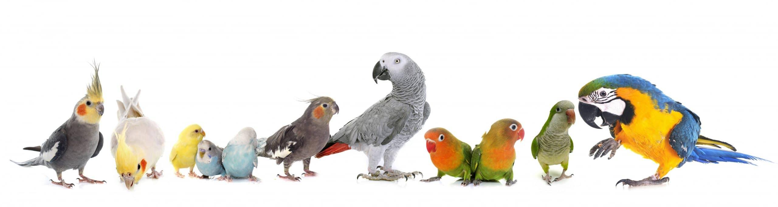 Grupper verschiedener Papageien & Sittiche