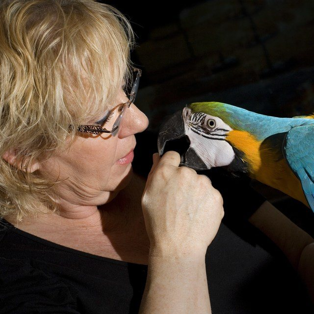 Sorgen Papagei