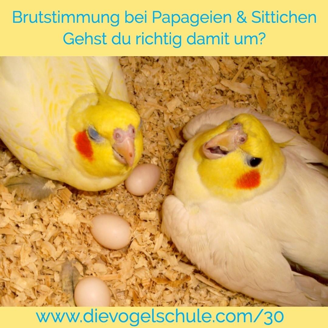 Brutstimmung bei Papageien & Sittichen IG