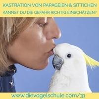 Kastration von Papageien & Sittichen