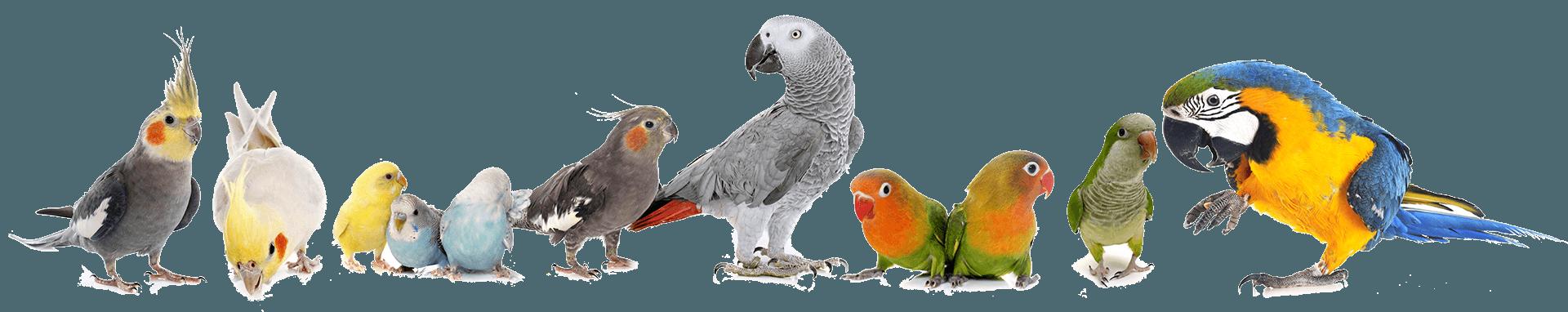 Papageien-Sittiche-Composite