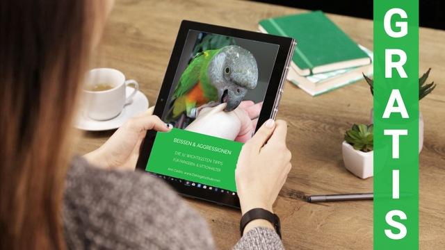 Beissen-10-Tipps-Papageien Sittiche
