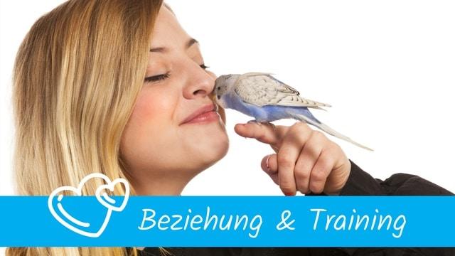 Beziehung & Training Papageien & Sittichen
