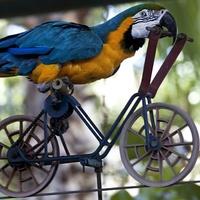 Ara Training Fahrrad - Clickertraining Missverständnisse
