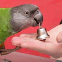Mohrenkopfpapagei apportiert Glöckchen - Clickertraining für Papageien & Sittiche