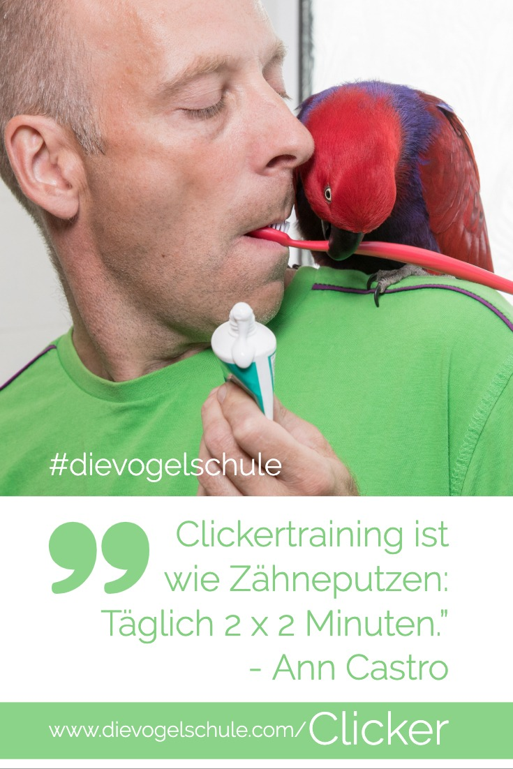 Clickertraining für Papageien & Sittiche Edelpapagei