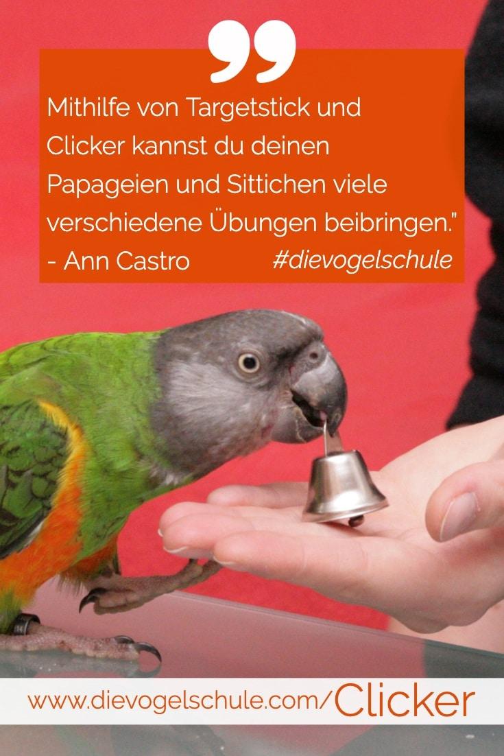 Clickertraining für Papageien & Sittiche Mphrenkopfpapagei