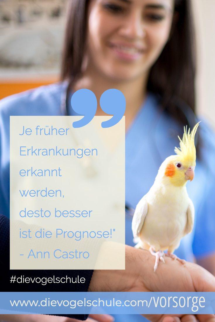 Vorsorge Papageien & Sittiche _ Nymphensittich Tierarzt