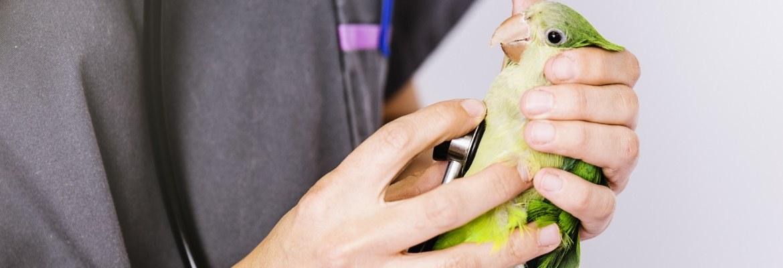 Vorsorge bei Papageien & Sittichen