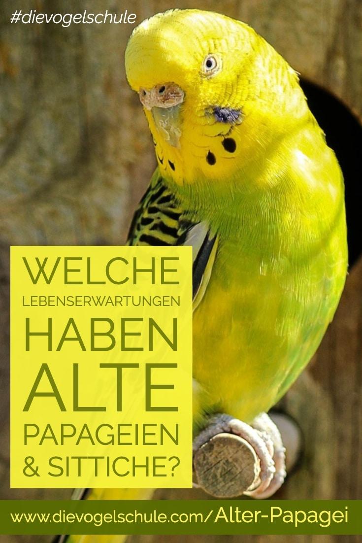 alter Papagei & Sittich P-2