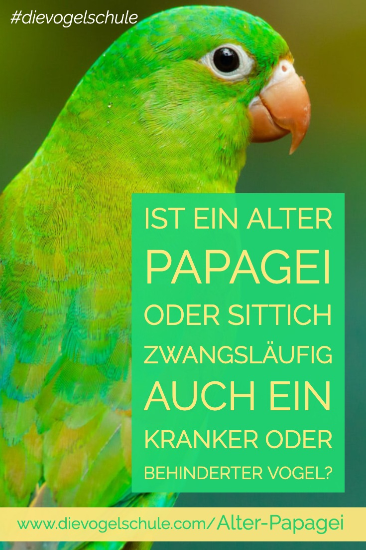 alter Papagei & Sittich P-3