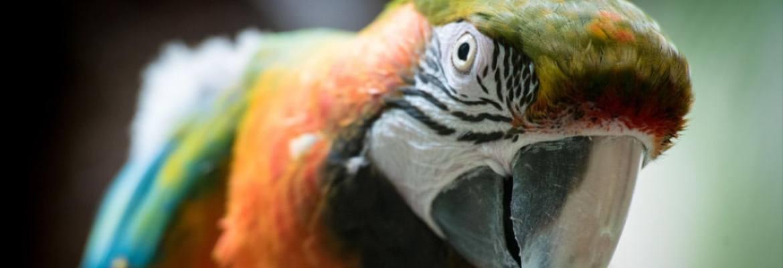 alter Papagei & Sittich WP