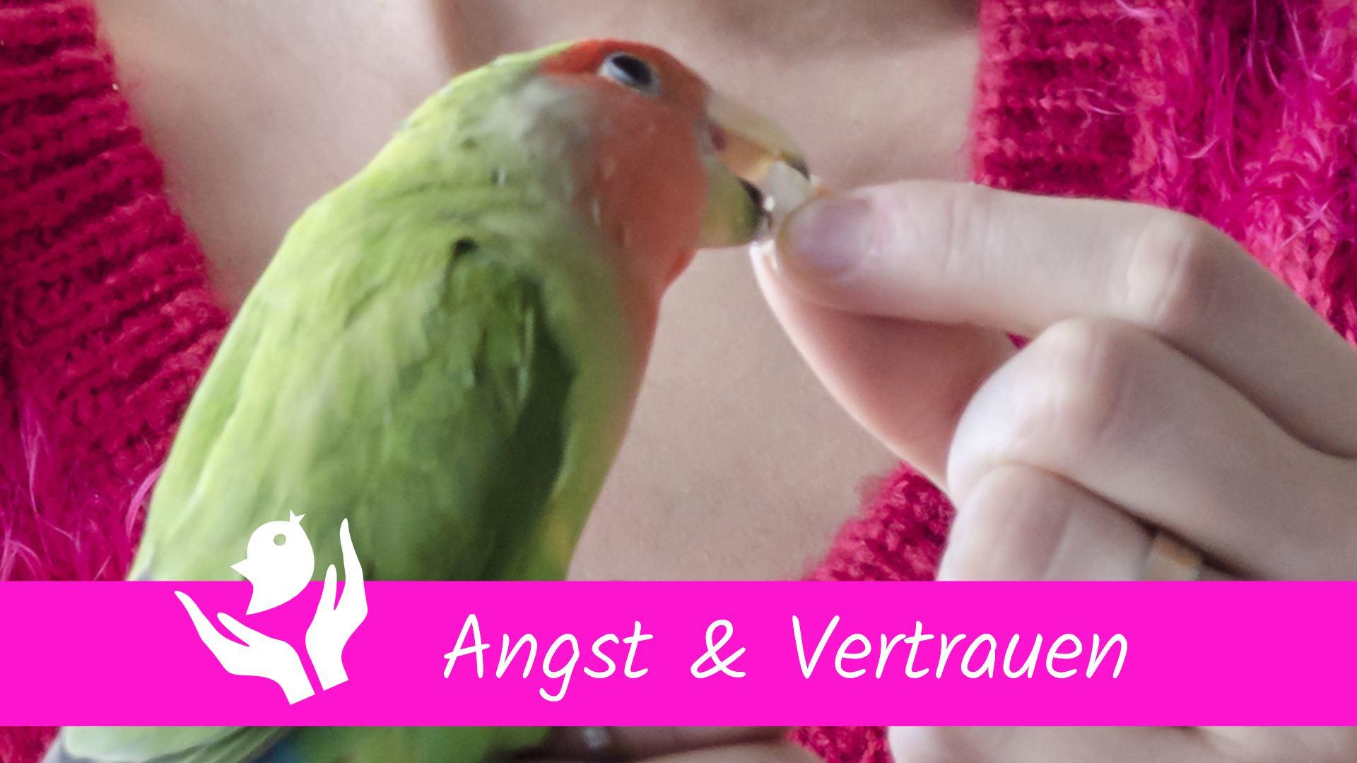 Angst & Vertrauen Kurs Papageien Sittiche