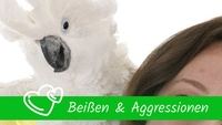 Beissen & Aggressionen Papageien Sittiche