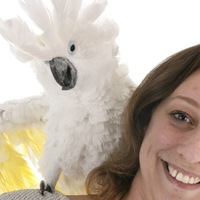 Beissen & Aggressionen Papageien Sittiche SQ 400px